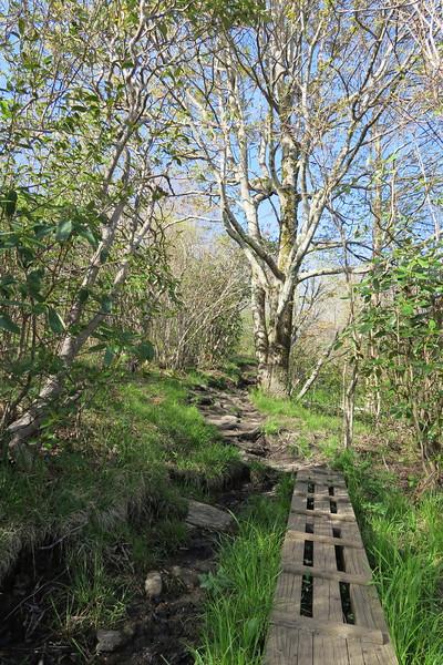 Sam Knob Trail -- 5,580'