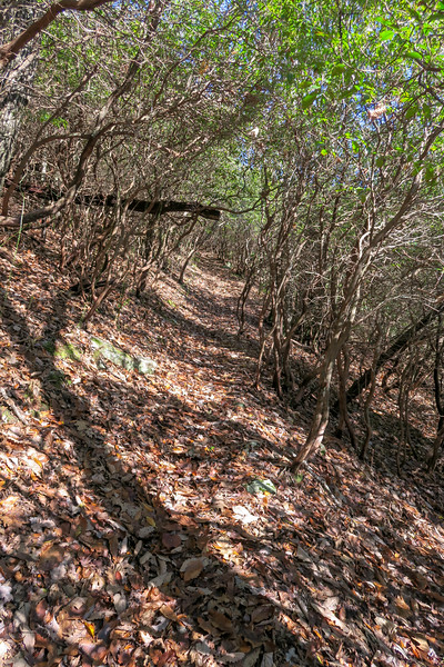 Seniard Ridge Trail -- 4,500'