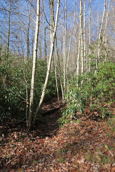 Seniard Ridge Trail/F.R. 5043 @ Discovery Falls Path -- 3,180'