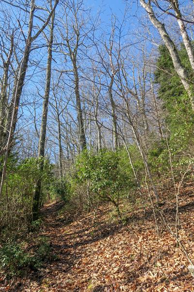 Seniard Ridge Trail -- 4,600'