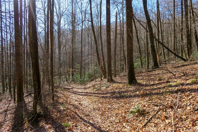Seniard Ridge Trail -- 3,450'