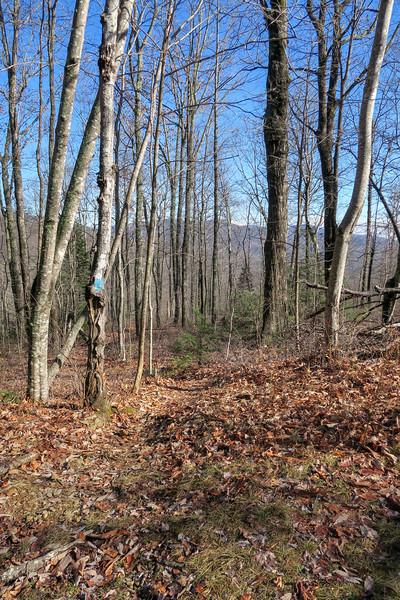 Seniard Ridge Trail -- 3,650'