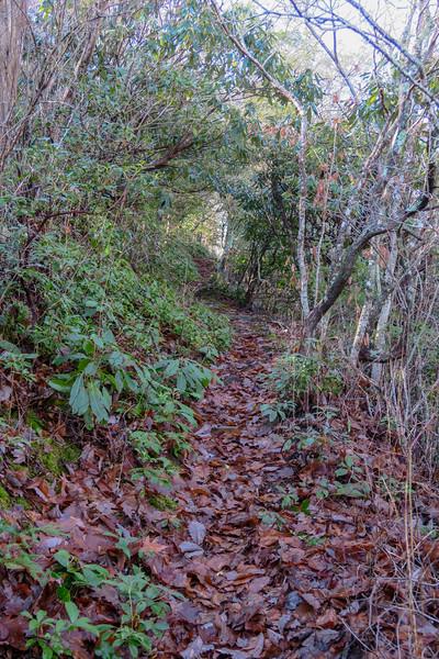Seniard Ridge Trail -- 3,980'