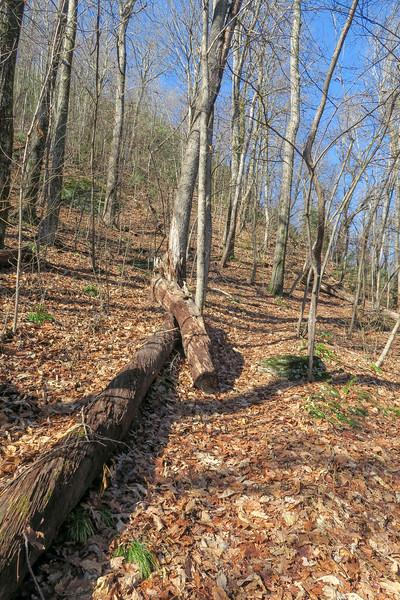 Seniard Ridge Trail -- 4,300'