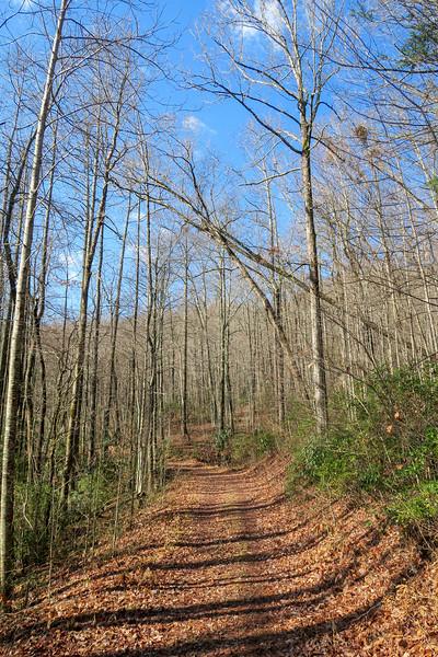 Seniard Ridge Trail/F.R. 5043 -- 3,200'