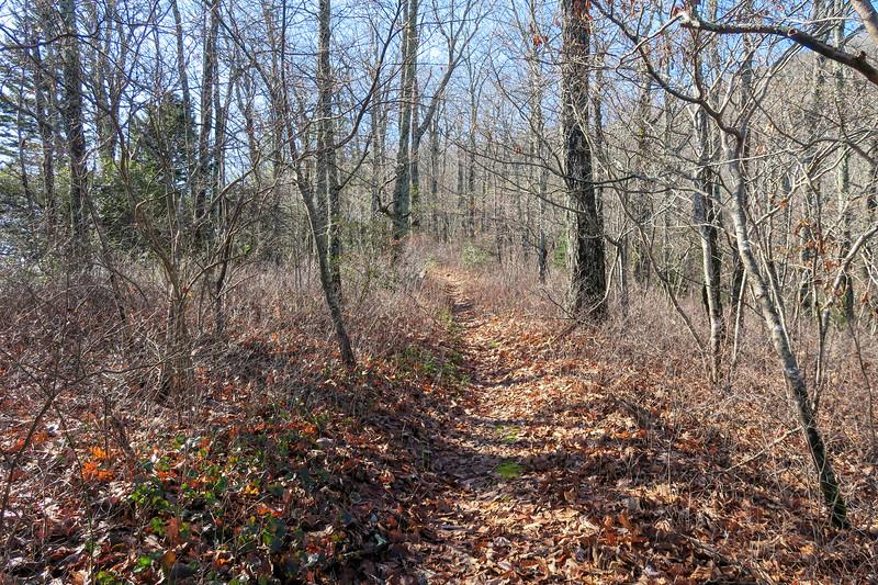 Seniard Ridge Trail -- 4,020'