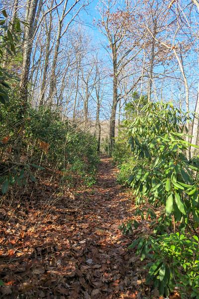 Seniard Ridge Trail -- 3,720'