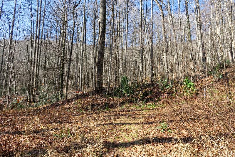 Seniard Ridge Trail/F.R. 5043 -- 3,420'