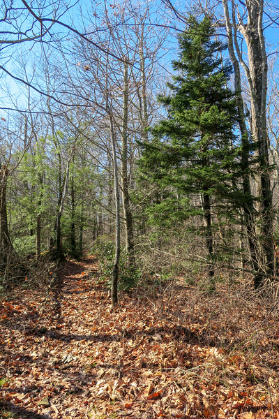 Seniard Ridge Trail -- 4,040'