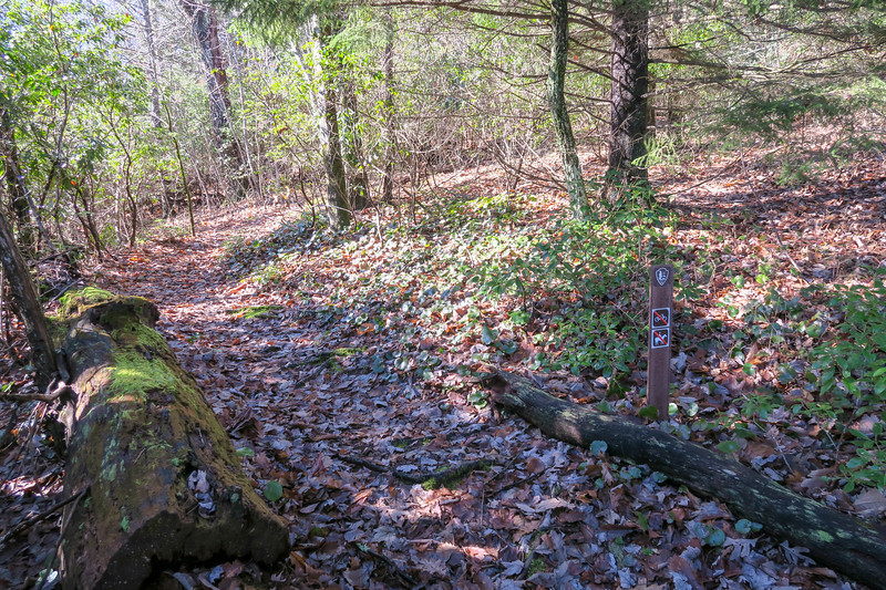 Seniard Ridge Trail -- 4,560'