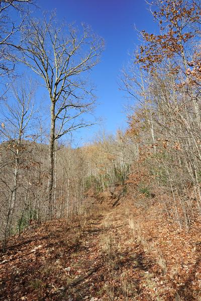 Seniard Ridge Trail/F.R. 5043 -- 3,260'