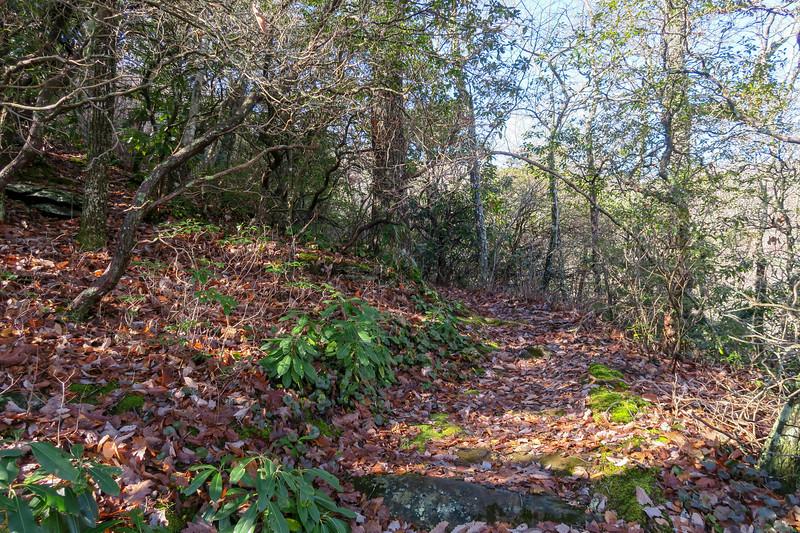 Seniard Ridge Trail -- 3,940'