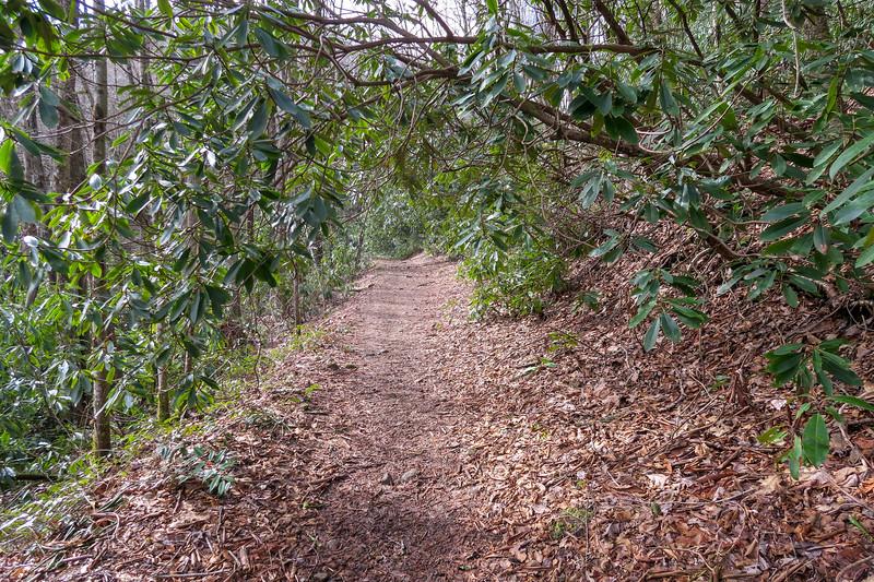 Shining Creek Trail -- 3,400'