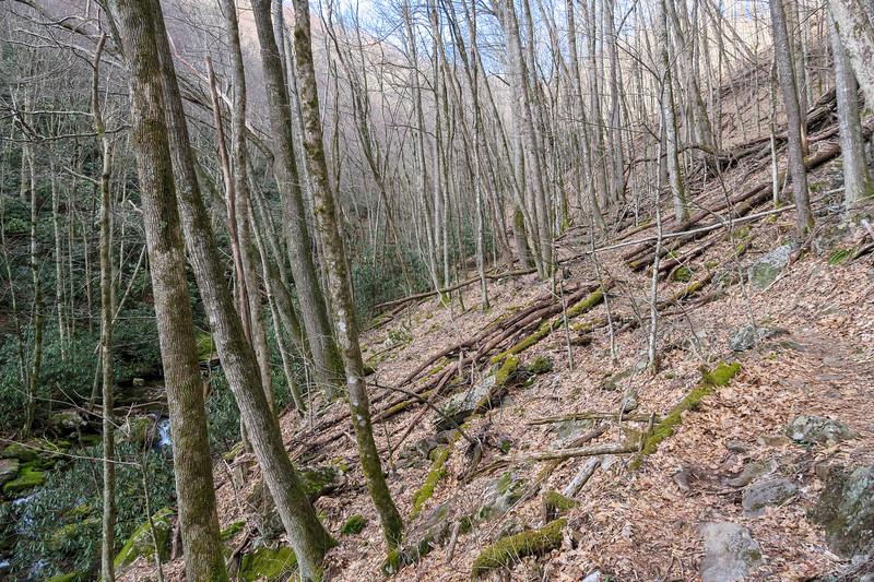 Shining Creek Trail -- 4,160'