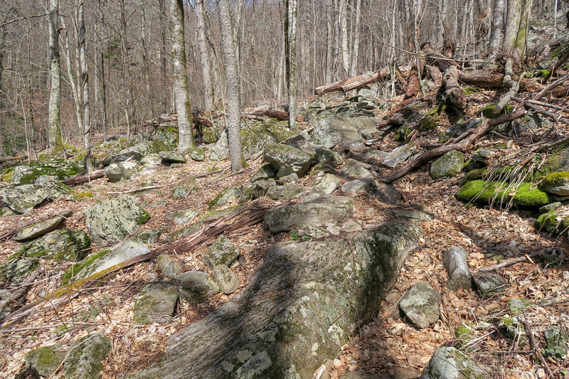 Shining Creek Trail -- 4,600'