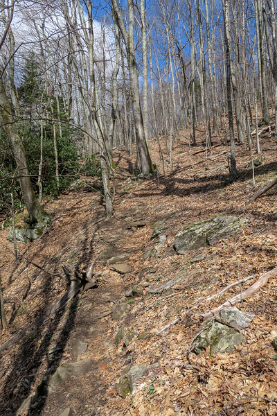 Shining Creek Trail -- 4,500'