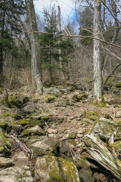 Shining Creek Trail -- 5,360'