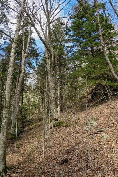 Shining Creek Trail -- 5,040'