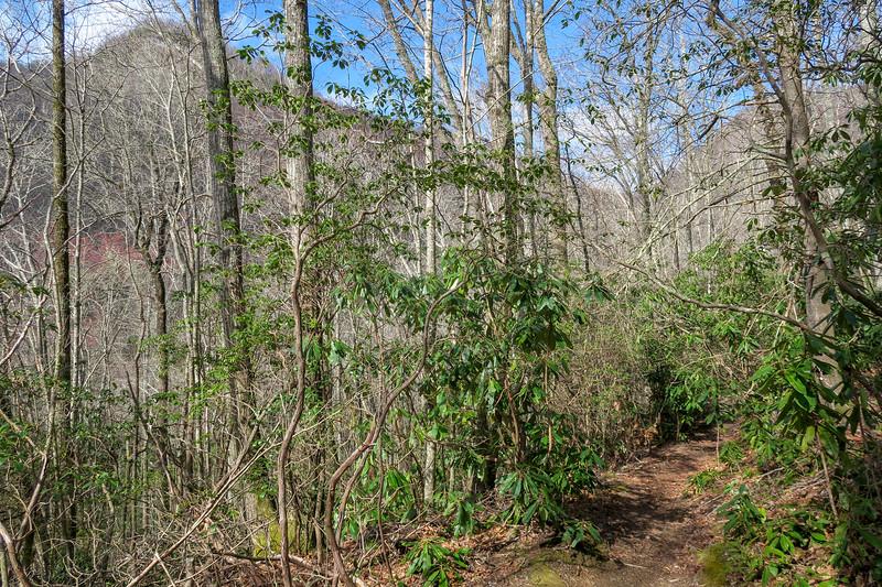 Shining Creek Trail -- 3,680'