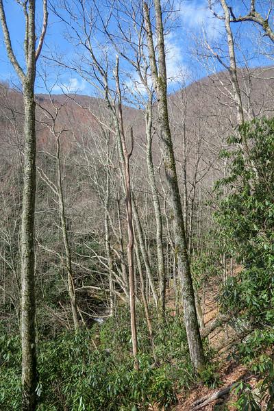 Shining Creek Trail -- 4,300'
