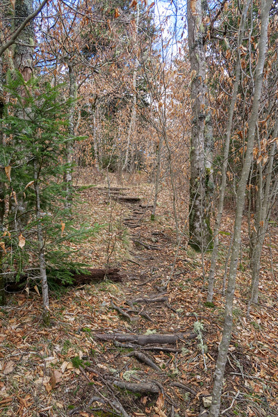 Shining Creek Trail -- 5,750'