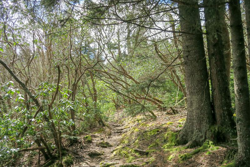 Shining Creek Trail -- 5,580'