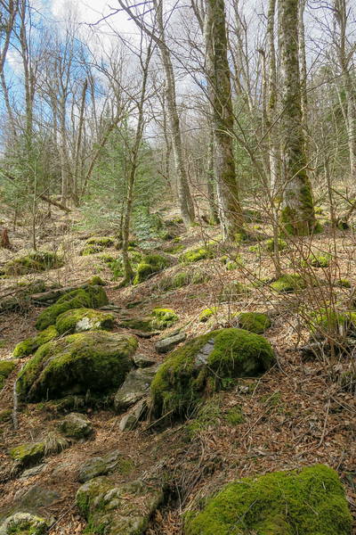 Shining Creek Trail -- 5,380'