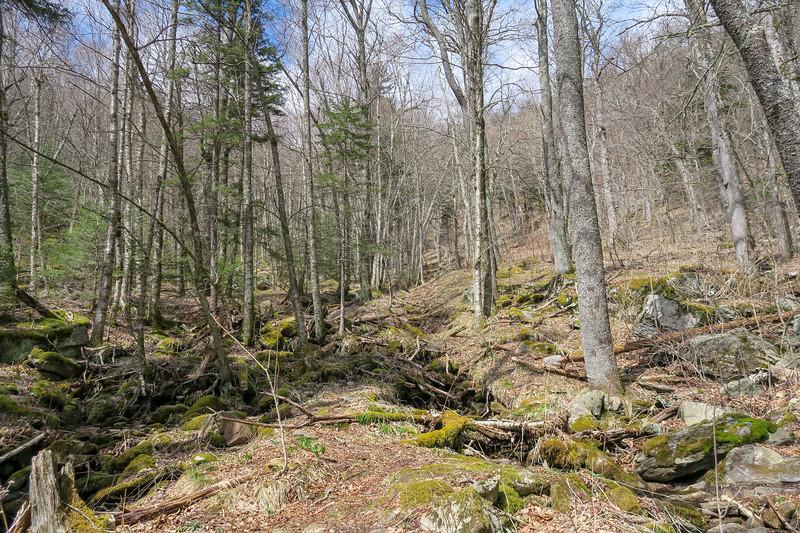 Shining Creek Trail -- 5,240'