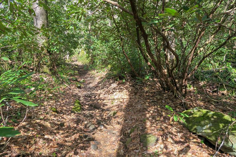 Shining Creek Trail -- 3,660'