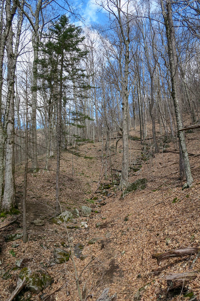 Shining Creek Trail -- 4,540'