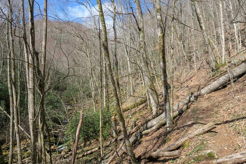 Shining Creek Trail -- 3,820'