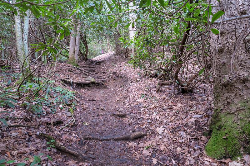 Shining Creek Trail -- 3,500'