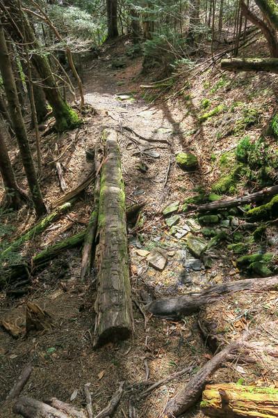 Shining Creek Trail -- 5,560'