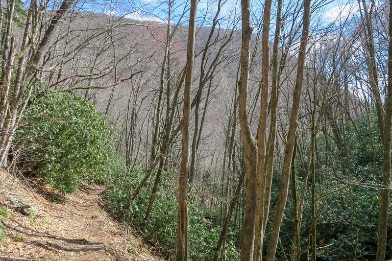 Shining Creek Trail -- 4,100'