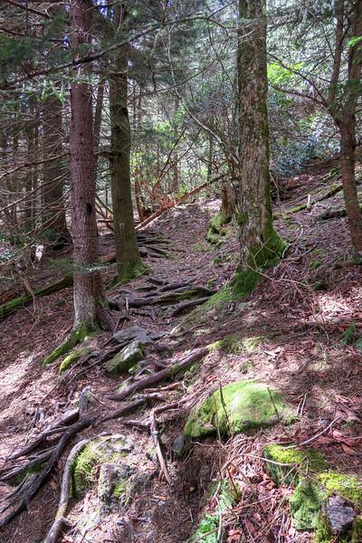 Shining Creek Trail -- 5,530'