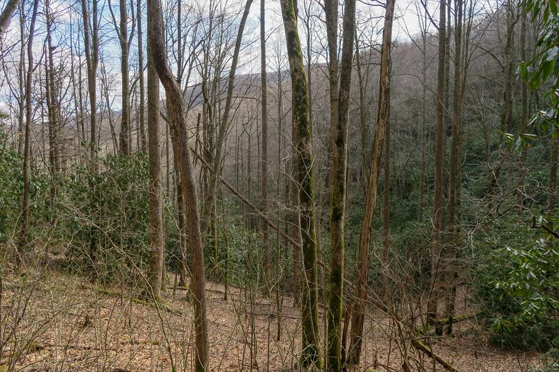 Shining Creek Trail -- 3,640'