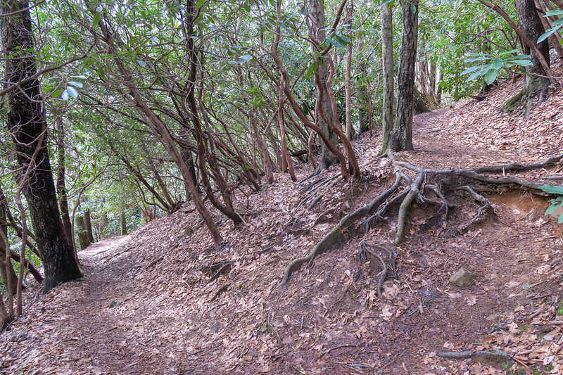Shining Creek Trail -- 3,550'