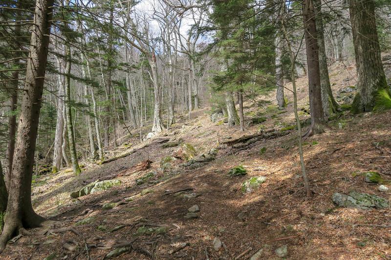 Shining Creek Trail -- 5,120'
