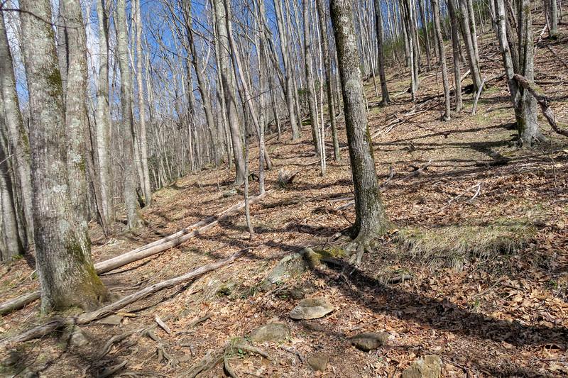 Shining Creek Trail -- 4,380'