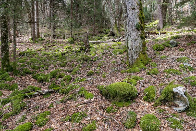 Shining Creek Trail -- 5,510'