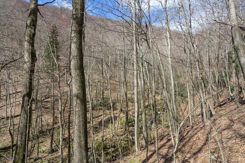 Shining Creek Trail -- 4,460'