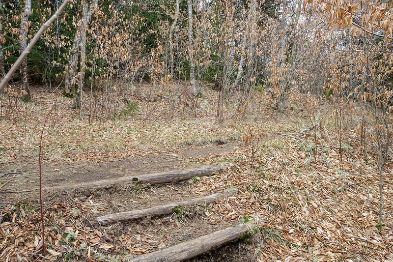 Shining Creek/Art Loeb Trail Junction -- 5,760'