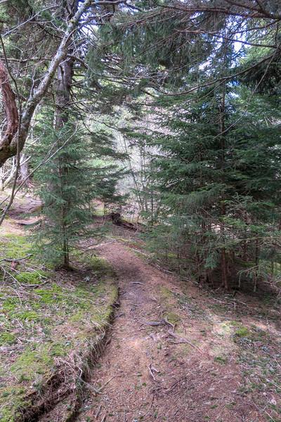 Shining Creek Trail -- 5,700'