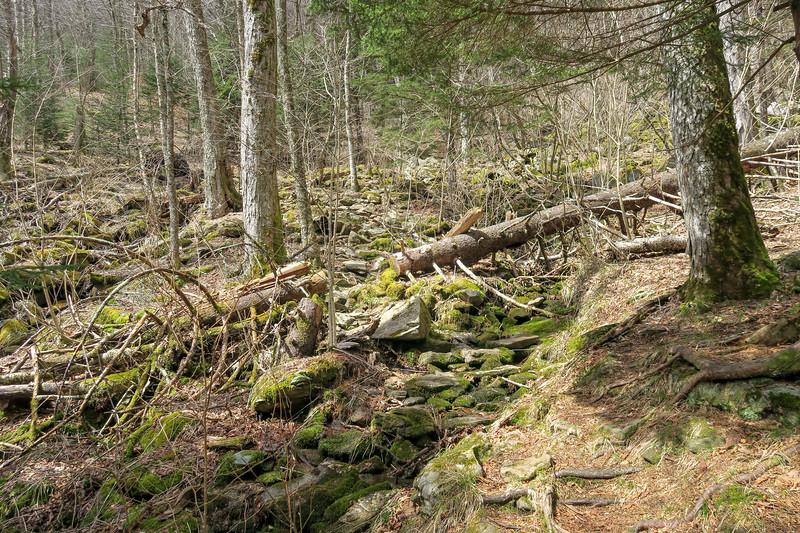 Shining Creek Trail -- 5,310'