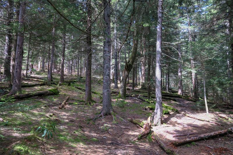 Shining Creek Trail -- 5,720'