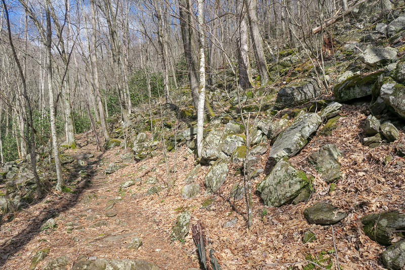 Shining Creek Trail -- 3,940'