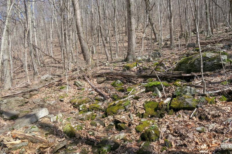 Shining Creek Trail -- 4,420'