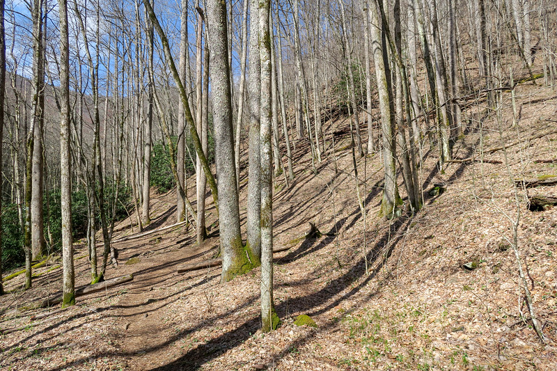 Shining Creek Trail -- 3,800'
