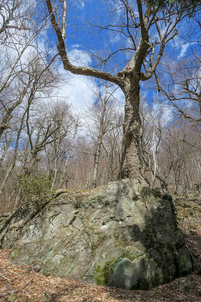 Shining Creek Trail -- 5,200'
