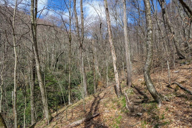 Shining Creek Trail -- 4,560'